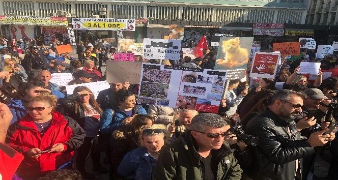 Hayvanseverler 'Hayvan Haklarını Koruma Kanun Tasarısı'nı protesto etti